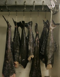 Toothfish trunks in the cleaning process