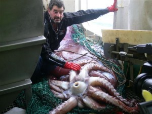 A colossal was hauled up on a NZ toothfish vessel in the Ross Sea